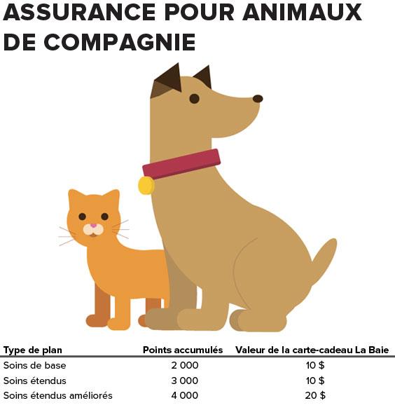 pet-assurance
