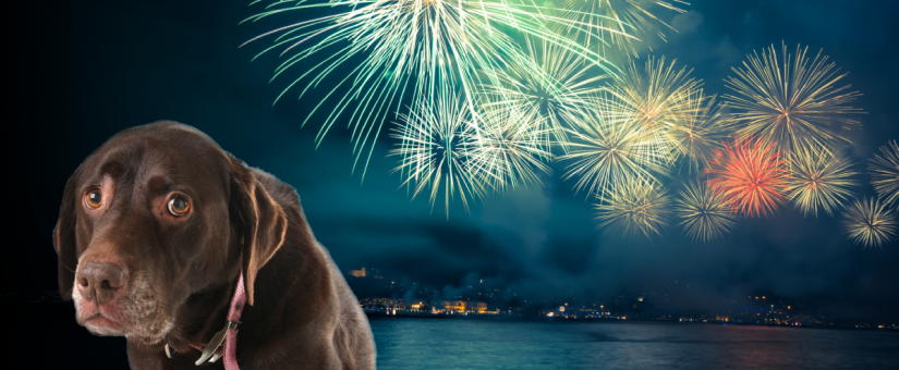Keep Your Pets Safe During Fireworks