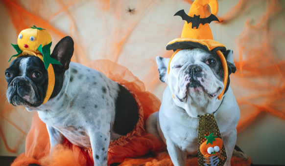 Keeping Your Pets Safe and Healthy on Halloween