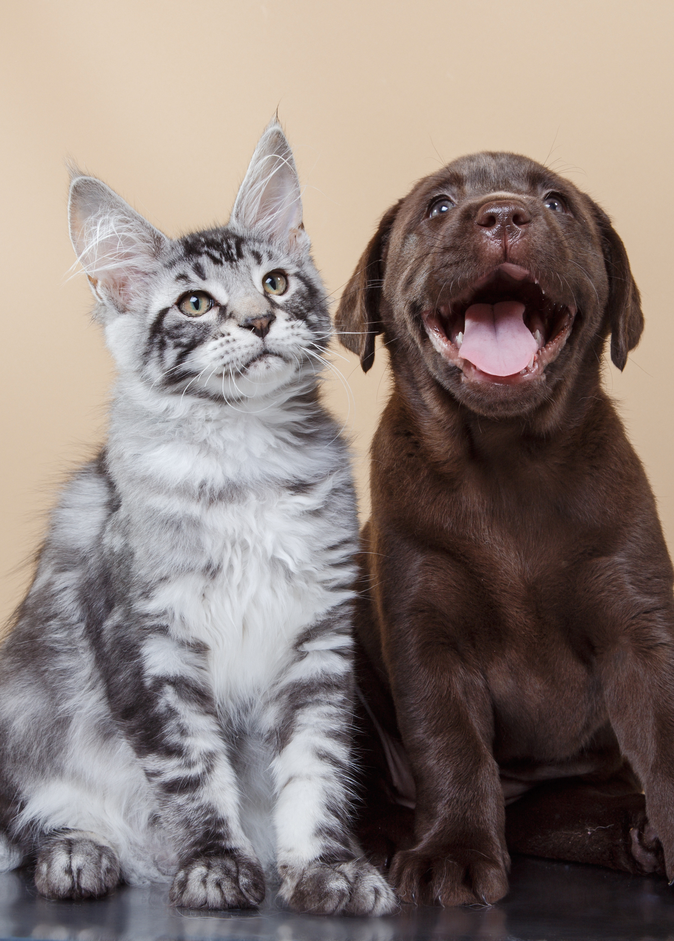 Cat and Dog - Fur family pet insurance plans with a multi pet discount
