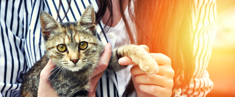 Four Factors to Consider Before Adopting a Pet