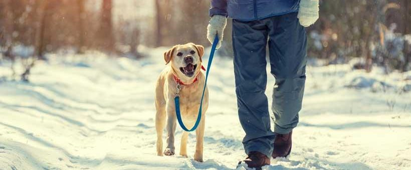 Tips to Keep Your Dog Safe This Winter