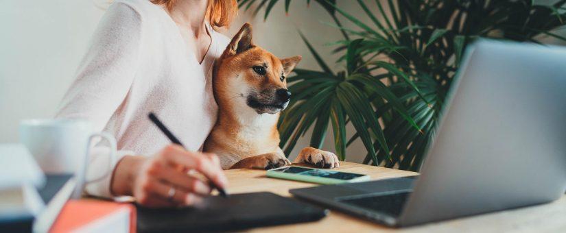 Travailler de la maison avec des animaux de compagnie